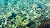 ouriço : Sea Urchins in the crystal clear water 1