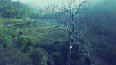 sunlights : Aerial View, Flying zoom in the big tree with beautiful water fall and green trees background on sunrise,Landscape nature with aerial camera shot,Chiangmai Thailand. Stock Footage