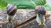 no people : two snails crawling on the stump