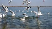 flock of sea gulls floating on the water and flying over the surface of the water Stock Footage