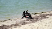 black cormorant stands on the sandy shore of the Black Sea, day