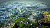 stone sticking out of the sea Stock Footage