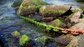 rusty chain overgrown with green alga sticks out of the sea Stock Footage