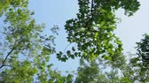tronco de árvore : Beautiful forest tree on sky, foliage and branch on nature summer in the park, environment concept.