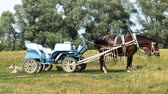 cart n corrugado : Video shows carriage pulled by horses. Rural landscape