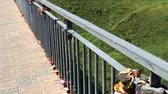 zábradlí : Metal multi-colored locks of newlyweds on the railing. Wedding symbol Dostupné videozáznamy