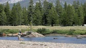 pescador : A man fly fishing in Yosemite National Park Stock Footage