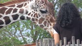 alcance : Hands reaching out to feed and pet an adult giraffe at Miami Zoo