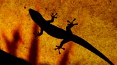 ještěrka : Gecko gets chased away from a smaller gecko on a semi-opaque ceiling, with shadows of leaves