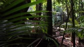handheld : Point-of-view shot, moving slowly through a lush tropical rain forest (Hawaii)