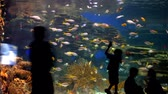 Silhouettes of people in front a large fish tank full of colorful fish in a time lapse
