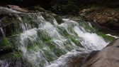 Rivierwater vallen over bemoste rotsen in de Smokey Mountains Stockvideo