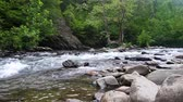 Scenic bos rivier in de Smokey Mountains Stockvideo