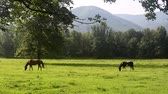pretty : Two horses grazing in a field in a scenic valley surrounded by hills at Cades Cove in the Smokey Mountains