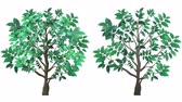 Two growing trees, with alpha channel. One tree is a little more realistic with leaf and bark texture, and more leaves. The second tree is basic and more cartoony. Стоковые видеозаписи