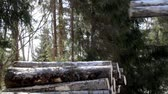flatbed : More snow covered logs are added in the pile of logs where most of them are covered in snow. Hydraulic instrument. Machine industry. Stock Footage