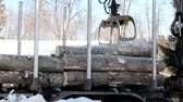 lumbering : Unloading smaller logs by threes while larger logs are by twos and some can only carry one log. Hydraulic instrument. Machine industry.
