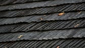 trough : Leaves on top of the wooden roof shingles. There are some tiny leaves that are wilted that can be found on top of the wooden roof shingles.