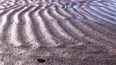 raspador : Close up view of the tire prints of a caterpillar tractor on the wet sand