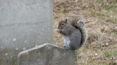 pedra tumular : On a tombstone is a small squirrel eating