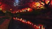 jangada : [4K recording, no sound] Cherry trees and flower vases of the former Arakawa river lit up in spring in Japan