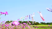 mei : [4K Recording] Konosu Flower Festival Wheat Nadeshiko In the Wind [zoomout] Stockvideo
