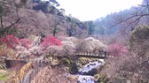 szilva : [4K recording, no sound] Japanese scenery Atami Umeen in early spring [zoomin]