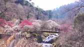 szilva : [4K recording, no sound] Japanese scenery Atami Umeen in early spring [zoomout] Stock mozgókép
