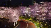 tam çiçeklenme : [4K recording, no sound] Japanese Spring Tokyo City Scapes [Night Cherry Blossoms in Tokyo Midtown] [Zoomout]