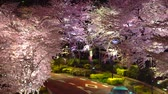 április : [4K recording, no sound] Japanese Spring Tokyo City Scapes [Night Cherry Blossoms in Tokyo Midtown] [Zoomin] Stock mozgókép