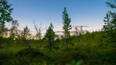 toundra : Beautiful Northern nature at sunset in summer.Time lapse