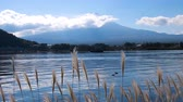 waterbird : Slow motion of grass flowers and Fuji mountain with blue sky and white cloud at Kawaguchiko Lake, Yamanashi, Japan Stock Footage