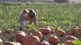 babies : Kids carrying pumpking at farm field