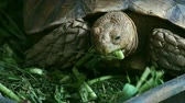 meal : Turtles eating