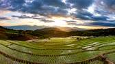 Time lapse, Sunset over the rice terrace fields reflected in the water at Pa Bong Piang village Chiang mai, thailand. video 4k Wideo