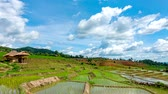 Time lapse, Clouds moving over the rice terrace fields reflected in the water at Pa Bong Piang village Chiang mai, thailand. Camera zoom out, video 4k Wideo