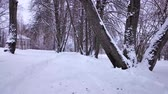 лес : Beautiful winter landscape in the park Mazurino Стоковые видеозаписи
