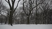 new york city : Panning HD Video of Trees in winter, Central Park with snow and Manhattan skyline, New York City