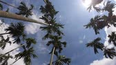 wind : Video footage Palm trees on blue sky background . travel, summer, vacation and tropical.