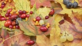 Autumn berries and leaves. Wiring. Harvest autumn fruits. Gifts of Autumn.