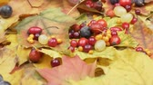 Autumn berries and leaves. Rotation Harvest autumn fruits. Gifts of Autumn. Stok Video