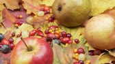 Autumn fruits and berries on colorful leaves. Rotation
