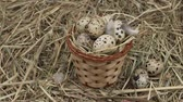 szövés : Quail eggs in a basket on the hay. Rotation Diet product. Organic food. Homemade quail eggs close up view. Easter.