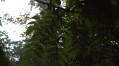 Heavy rain in summer with sunbeam, raindrops on trees branch, idyllic tranquil scene Filmati Stock