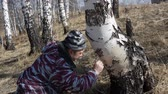 сок : man in the wood gathers birch sap