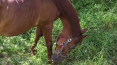 horse face : horse is grazed on a meadow