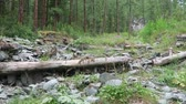 riverbank : Water stream flowing in the forest. Altai, Russia. Siberia Stock Footage