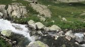 sauvage : Mountain flowing stream picturesque view. Altai Mountains, Russia Vidéos Libres De Droits