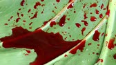 chupar : Blood on Green Leaves