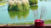 вывеска : Gift box and nature and Lake